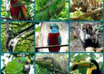 Animales que habitan en América Central