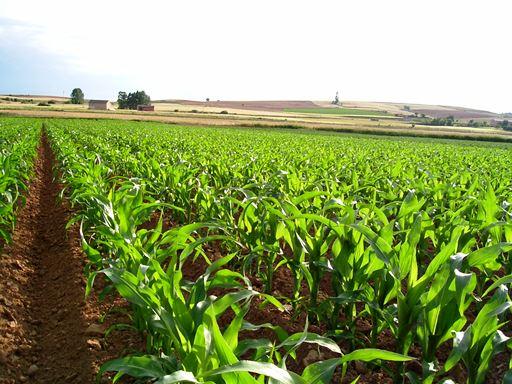 ¿Qué se cultiva en América Central?