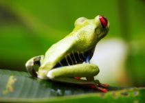 Fauna de América Central