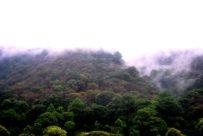 descubre los principales bosques de américa central