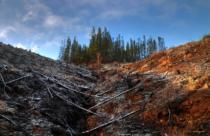 deforestación en centroamérica
