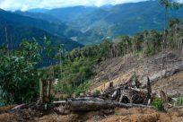 descubrir datos de la deforestación en américa central